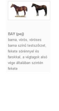 BAY (pej)