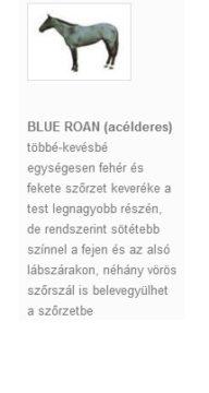 BLUE ROAN (acélderes)