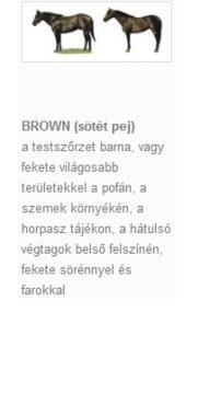 BROWN (sötét pej)