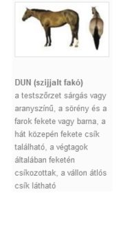 DUN (szijjalt fakó)