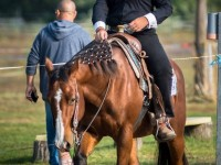 red-horse-ranch-utanpotlas-neveles-10