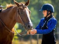 red-horse-ranch-utanpotlas-neveles-20