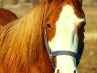kancak-csikok1-red-horse-ranch