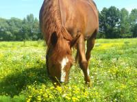 kancak-csikok11-red-horse-ranch