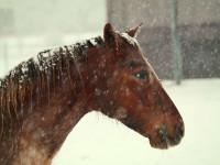 kancak-csikok12-red-horse-ranch