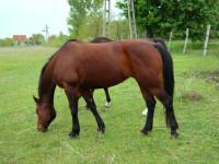 kancak-csikok13-red-horse-ranch