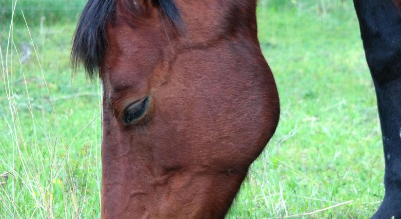 kancak-csikok14-red-horse-ranch