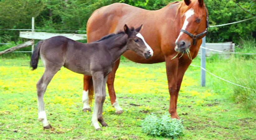 kancak-csikok15-red-horse-ranch