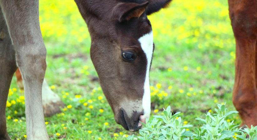 kancak-csikok16-red-horse-ranch