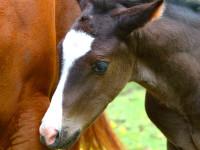 kancak-csikok17-red-horse-ranch
