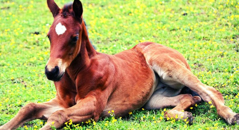 kancak-csikok18-red-horse-ranch