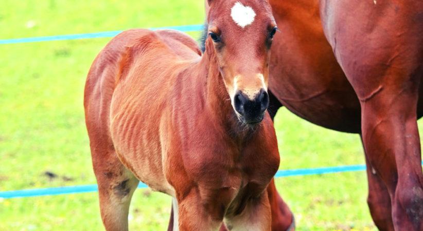 kancak-csikok19-red-horse-ranch