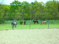 kancak-csikok2-red-horse-ranch