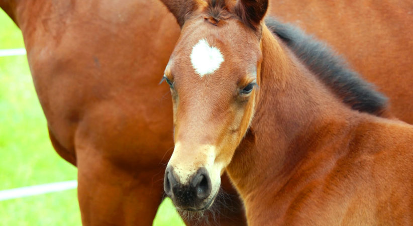 kancak-csikok20-red-horse-ranch