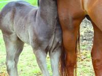 kancak-csikok21-red-horse-ranch