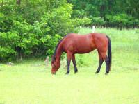 kancak-csikok22-red-horse-ranch