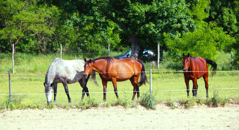 kancak-csikok3-red-horse-ranch