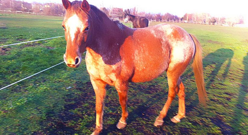 kancak-csikok4-red-horse-ranch