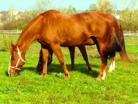 kancak-csikok5-red-horse-ranch