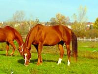 kancak-csikok6-red-horse-ranch