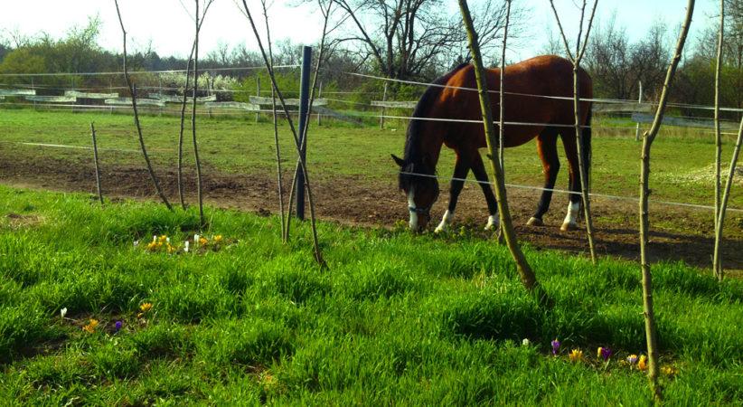 kancak-csikok8-red-horse-ranch