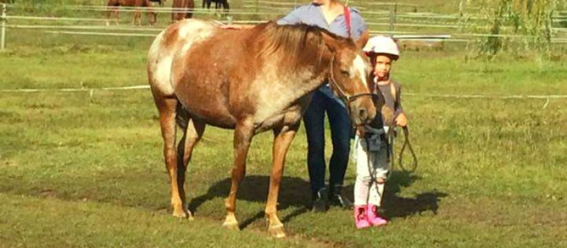 red-horse-ranch-lovasiskola-2