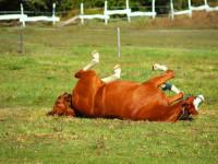 bertartas-red-horse-ranch1