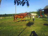 bertartas-red-horse-ranch4