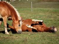 bertartas-red-horse-ranch41