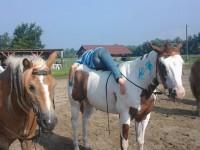 red-horse-ranch-lovastabor3