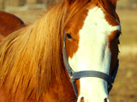 kancak-csikok1-red-horse-ranch