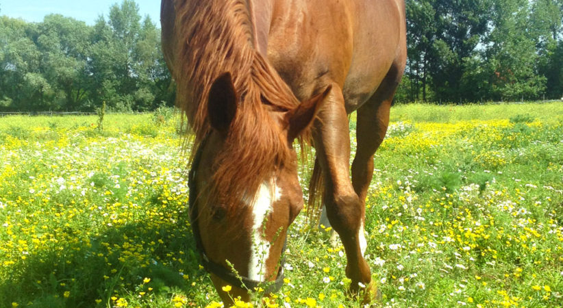 kancak-csikok11-red-horse-ranch