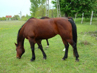 kancak-csikok13-red-horse-ranch