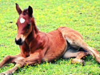 kancak-csikok18-red-horse-ranch