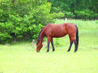 kancak-csikok22-red-horse-ranch