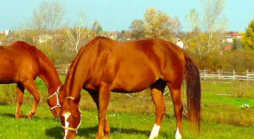 kancak-csikok6-red-horse-ranch