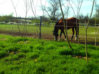 kancak-csikok8-red-horse-ranch