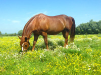 kancak-csikok9-red-horse-ranch