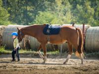 red-horse-ranch-lovasiskola-35